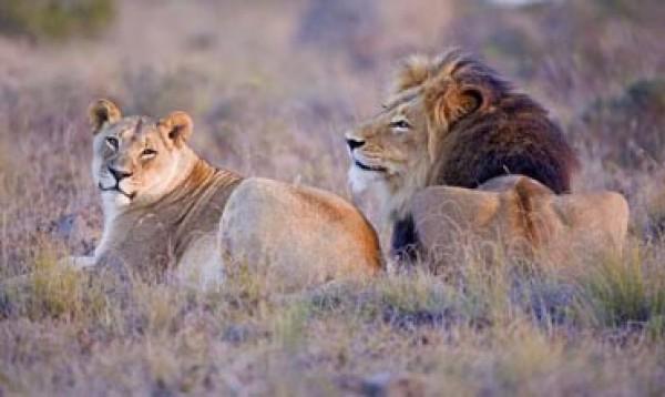 aval-voyages - Afrique du Sud